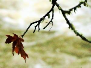 leaf one (2)